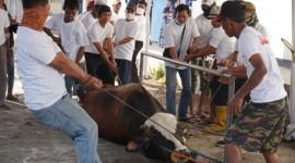 KBN Salurkan Daging Kurban kepada Masyarakat